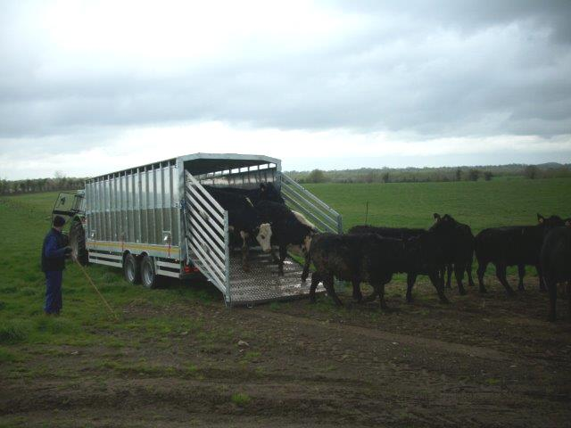 Easy access for livestock to enter and exit